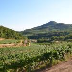 baone - azienda agricola vignale di cecilia