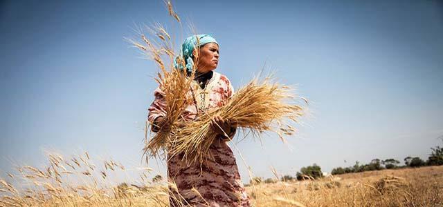 """Il """"Premio Nuove Economie – Banca Etica"""", premio collaterale dell'Euganea Film Festival è assegnato al miglior film, italiano o straniero, che affronta tematiche legate alla sostenibilità e accessibilità sociale ed economica in ambito alimentare e agricolo."""