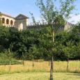 Un ricco calendario di eventi e visite speciali per vivere all'aperto e in tutta sicurezza Villa dei Vescovi fino a tarda sera