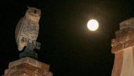 Sabato 31 ottobre e domenica 1°novembre 2020 a Villa dei Vescovi, Luvigliano di Torreglia (PD), visite speciali accompagnate da animazioni per tutta la famigli e una giornata interamente dedicata alla zucca