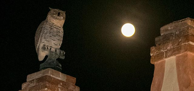 Halloween a Villa dei Vescovi