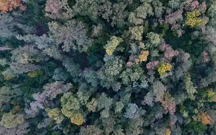 Al via le Giornate d'autunno del FAI in Veneto